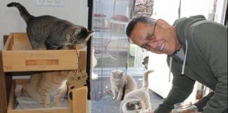 Man Fed the Feral Cats at His Work for Years – But Then - He Retired And ...