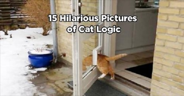 15 Absolutely Hilarious Pictures of Cat Logic!
