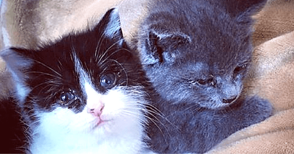 Hungry, Tiny Kittens Discovered Without Their Mom Refused To Stop Hugging Each Other ...