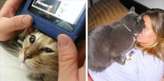 10 Funny Cats Who Clearly Don't Understand the Concept of Personal Space!