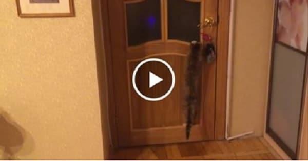 Smart Senior Cat Flawlessly Opens Door!