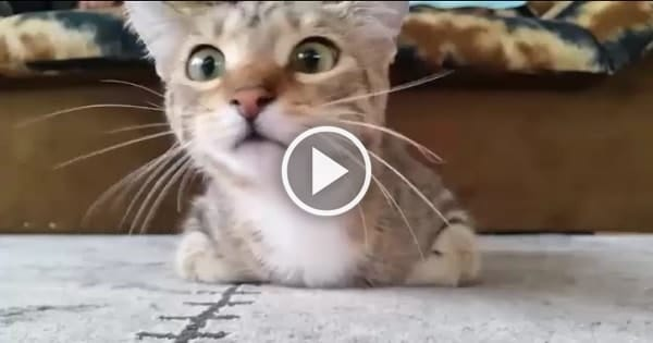 Kitty Reacts When Watching a Horror Movie!