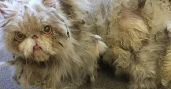 UPDATE: Chicago Basement Cat Sheds 5 Lbs. of Matted Fur and Now, Finally …