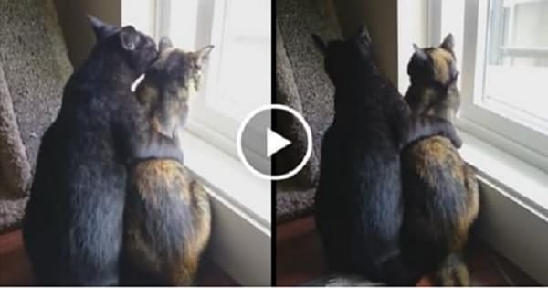 2 Rescue Cats Become The Very Best of Friends!