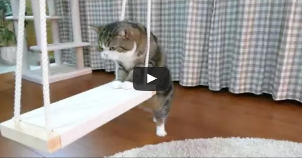 Maru Using a Swing for the Very First Time!