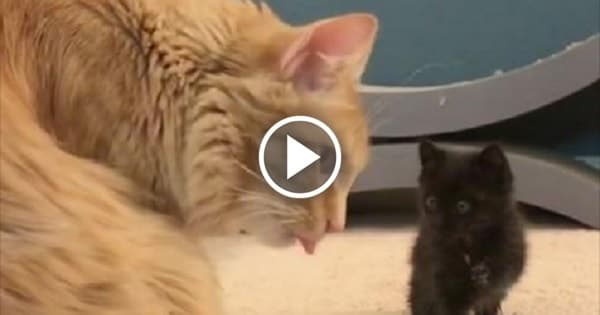 Little Kitten Learning How to Be a Cat – and It's the Cutest Thing Ever!