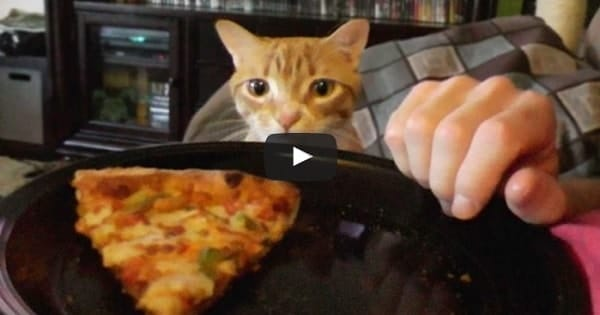 Trying To Eat with a Cat Around! Yeah … Right!