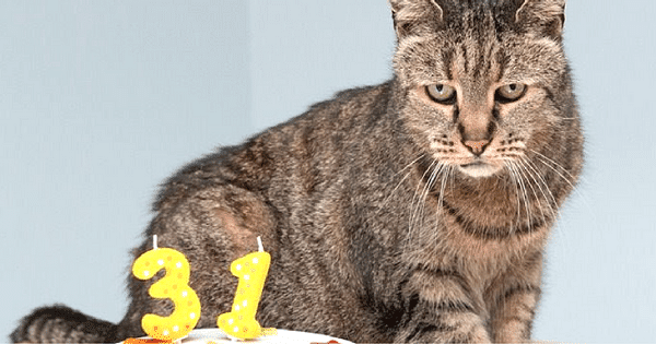 The 7 Ways To Take Great Care Of A Senior Cat At Home!