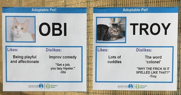 Lovable Prankster Helps Kitties Get Adopted by Making Them Name Tags