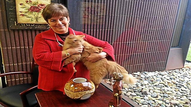 From Animal Shelter to Government Office, Mayor Turns One Cat's Journey into a Charmed Life!