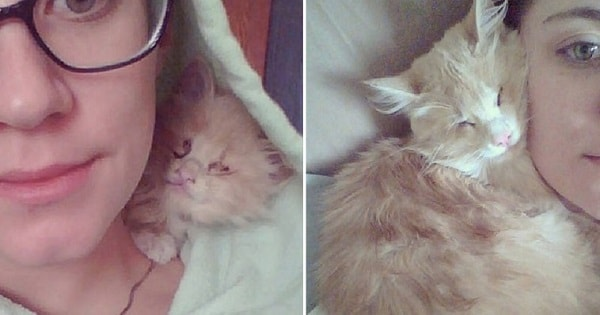 No One Wanted To Rescue This Blind Kitten Until …