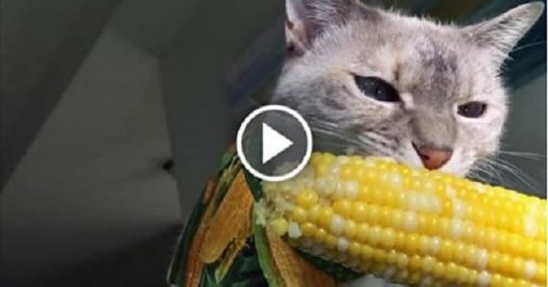 Meet Lily, The Adorable Kitty Who Just Loves to Eat …