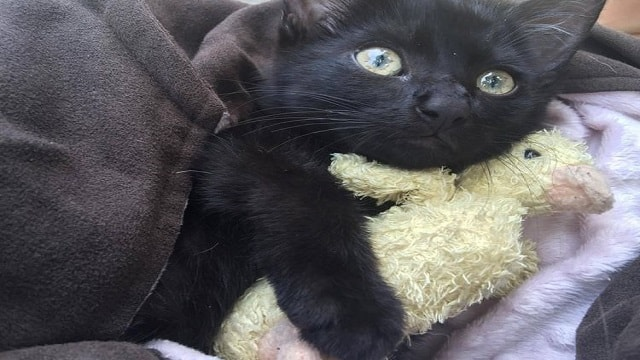 Lost Kitten Who Almost Drowned in the Ocean Gets Adopted by the Brave …