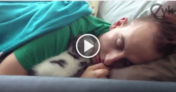 Precious Moment Between Fluffy Kitten and Her Human Cat Dad!
