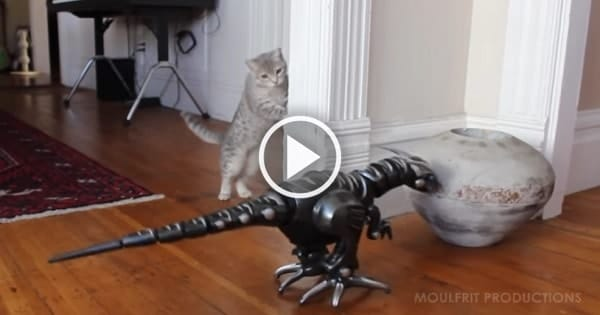 Kitty Meets Robot Dinosaur For The Very First Time!