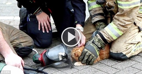 Hero Firemen Bring Lifeless Cat Out of Burning Building and …