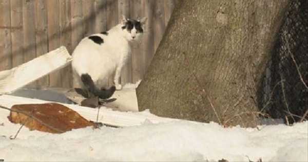 Rhode Island Woman Is Accused of Poisoning Feral …