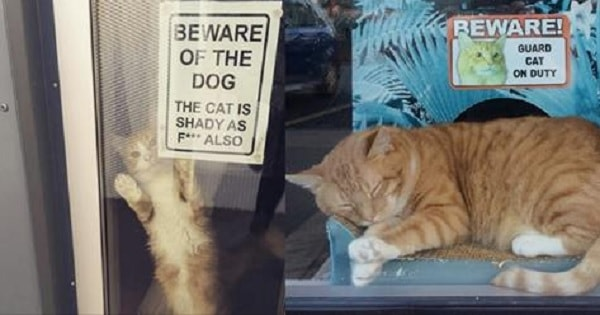 10 Kitties Who Take Their Jobs of Guarding the House VERY Seriously!