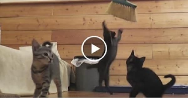Trying to Sweep the Floor with a Group of Kittens Around – Mission Impawssible!