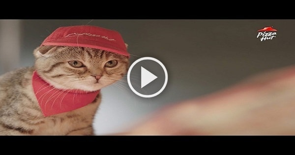 Pizza Hut Japan Is Bringing Back Its Store Run Completely by Cats!