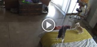 Cat Tells Dog to Shut The Heck Up - Funny As Heck!