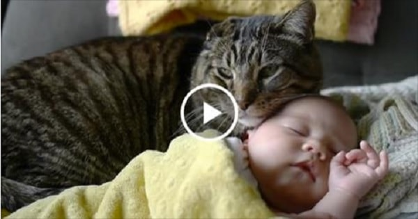 Newborn Baby is Introduced to The Family's Cat. What Happens Next is Simply – WOW!