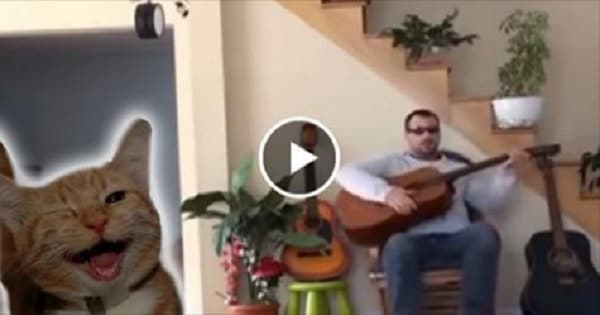 Guitarist Mistreats Cat But the Cat Has the Last Word!