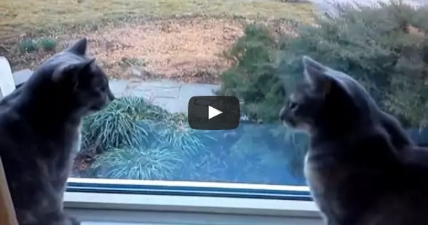 Two Lovable Cats Having a Deep, Meaningful Conversation!