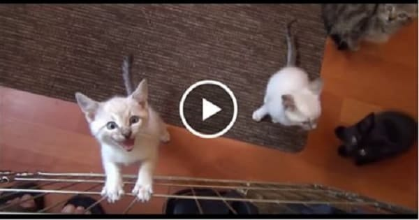 These 7 Squeaky Little Foster Kittens Will Brighten Your Day!