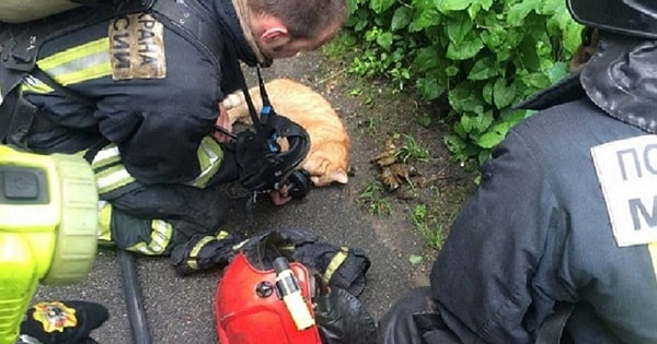 Cat Named 'Angel' Saves His Human From Fire Before Sadly …