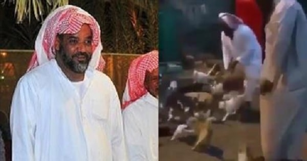 Saudi Man Has Been Taking Care of More Than 100 Cats for 20 Years!