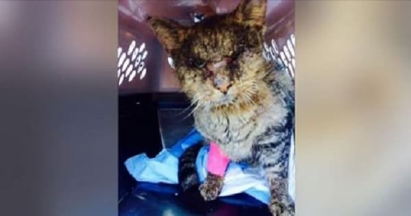 UPDATE: Donations From Across the Globe Save Cat No One Wanted to ….