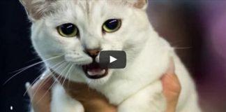 12+ Of The Rarest Cat Breeds Ever!