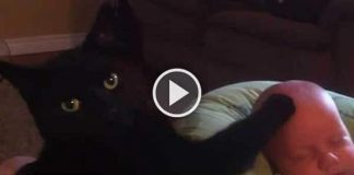 Black Cat Lovingly Soothing Crying Baby To Sleep – Too Cute!