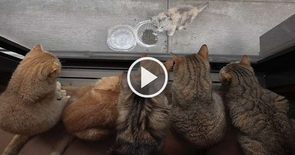 These 10 Cats Simply Cannot Stop Thinking About Stray Visitor!