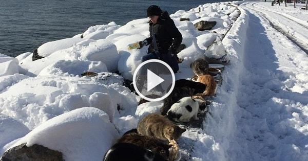 Kind Samaritan Feeds Large Number of Feral Cats