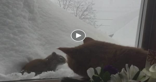 Cat and Squirrel Engage in Adorable Staring Contest!