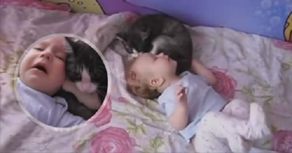Sweet, Kind Kitty Soothing Crying Baby!