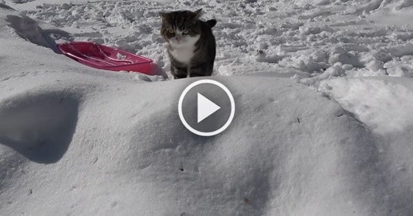 Adorable Video of Maru Enjoying a Day in the Snow!