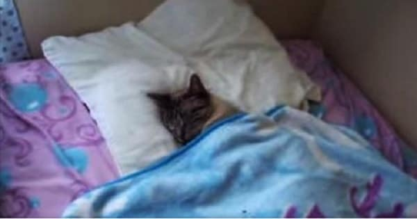 Human Arrives Home To Find His Cat Sleeping In His Bed - LIKE A BOSS!