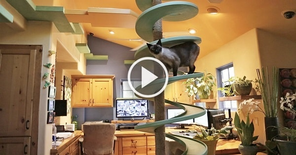 Clever Man Turns His House Into Indoor Cat Playland and Our Hearts Explode!