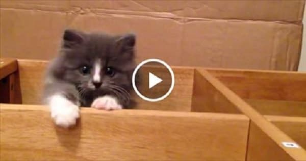 Fluffy Little Kitten Performs Super Cute Escape Routine!