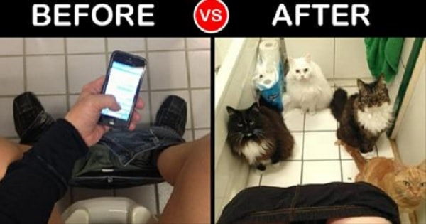 8 Things That Can Never Be The Same After Getting a Cat!