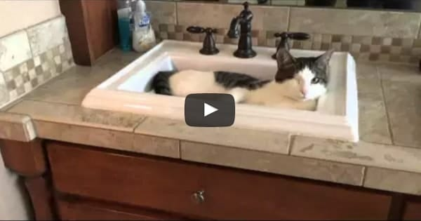 Smart One-eyed Kitty Knows Exactly What to Do When He is Thirsty!