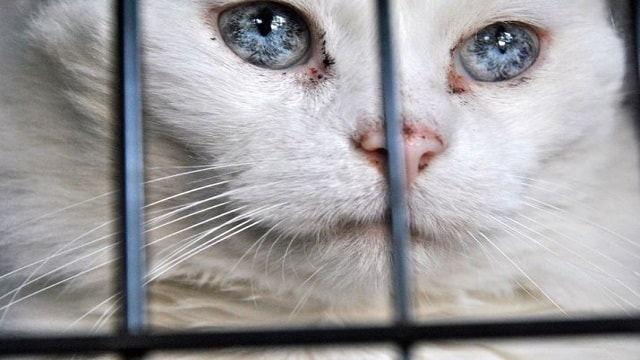 This Deaf Stray Cat Wouldn't Let Anyone Get Close to Him, but His Rescuer Never …