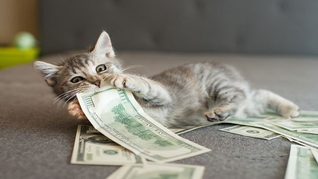 Trust Funds for Shelter Pets – Are a Thing Now!