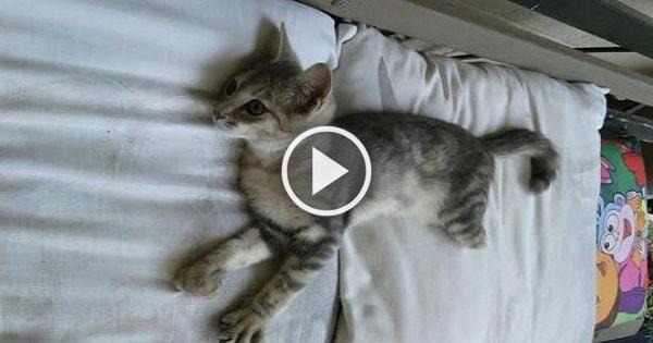 Kitten Still a 'Happy Camper' Despite Two Legs Which Were Cut Shorter!