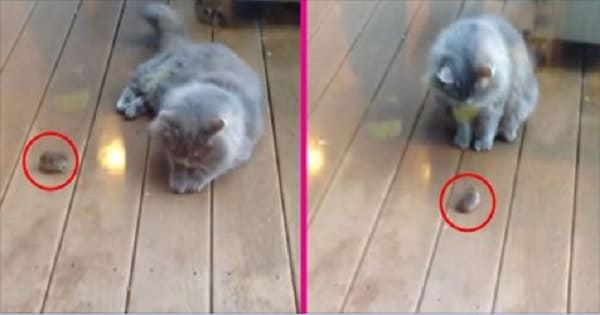 Mouse Casually Approaches a Cat – But What Happens Next?