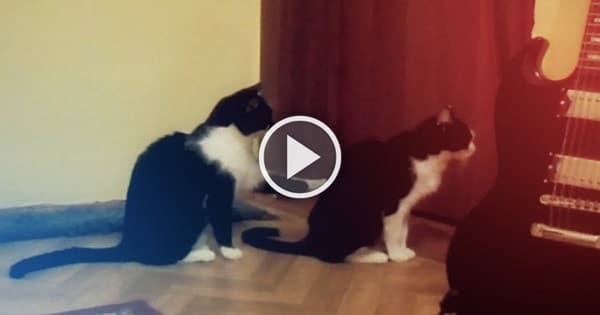 Cat Tries to Apologize – Hmmmm!