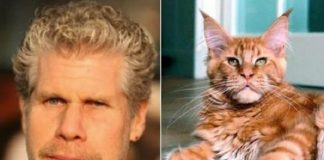 17 Cats That Look Exactly Like Celebrities!